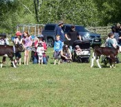 Pet Parade Pet Day 2015 16 opt