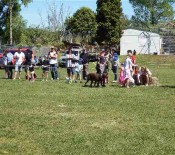 Pet Parade Pet Day 2015 21 opt