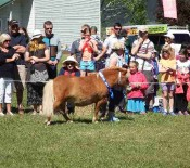 Pet Parade Pet Day 2015 25 opt