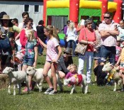Pet Parade Pet Day 2015 opt