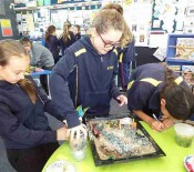 WPS Pet Day Creations Senior School 8